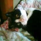 愛猫(携帯版) 059.JPG